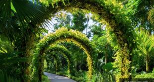Bắt đầu chuyến tham quan Botanic Garden
