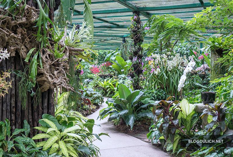 National Orchild Garden