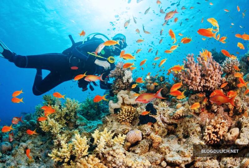 Raja Ampat- nơi đáp ứng niềm đam mê lặn biển , ngắm san hô của khách du lịch