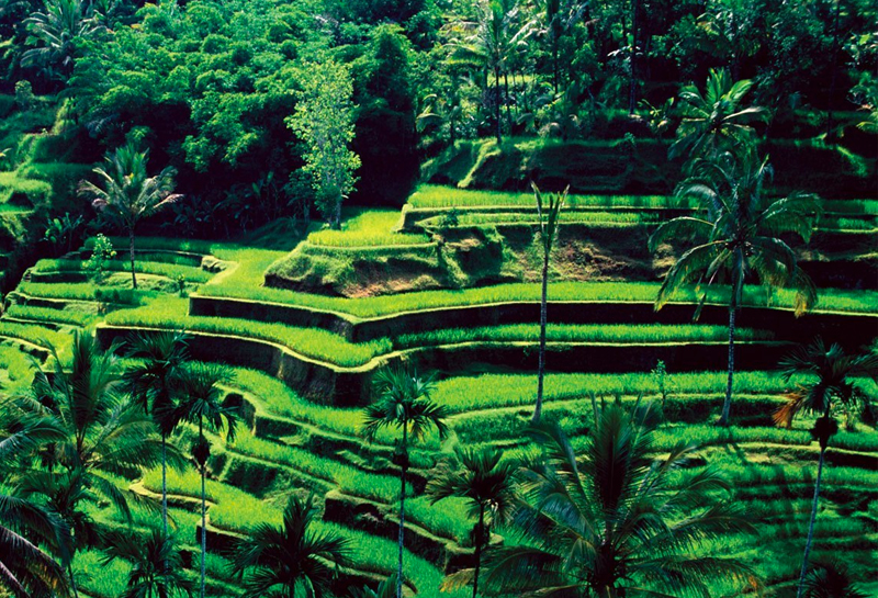 Ubud - 10 địa điểm du lịch Bali 04