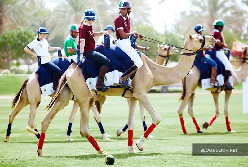 Chơi polo bằng lạc đà mới là mốt