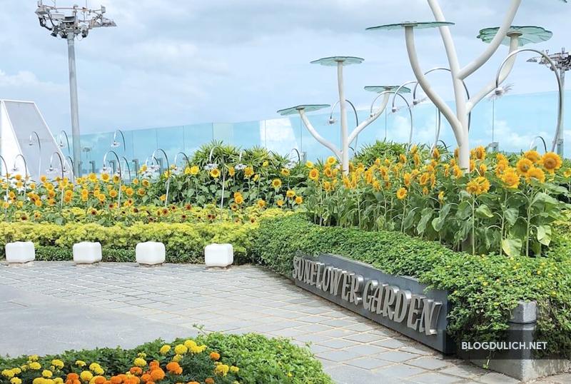 sunflower-garden